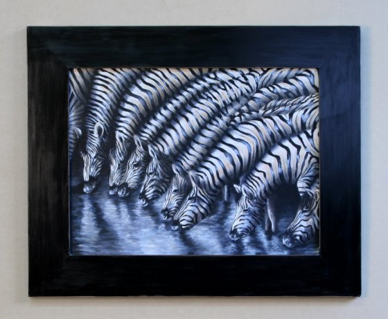 zebras refletidas